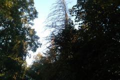 #107 20.09.2020r. Borkowo Lęborskie - drzewo zagrażające powaleniem na drogę wojewódzką nr 213