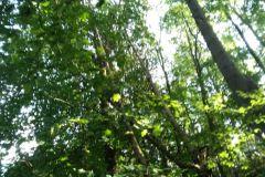 #110 27.09.2020r. Borkowo Lęborskie - drzewo powalone na drogę wojewódzką nr 213
