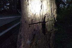 #111 27.09.2020r. Łętowo - drzewo zagrażające powaleniem na drogę powiatową