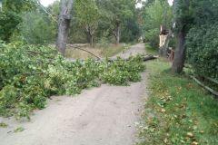#119 14.10.2020r. Sasino ul. Pałacowa - drzewo powalone na drogę gminną