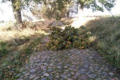 #126 17.10.2020r. droga Lublewo Lęborskie - Słuchowo - drzewo powalone na drogę gminną -
