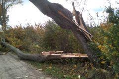 #127 22.10.2020r. droga Osieki Lęborskie - Lublewko - drzewo powalone na drogę  powiatową nr DP 1432G