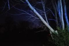 #13 17.02.2020r.  Słajkowo drzewo pochylone nad drogą gminną