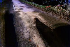 #131 31.10.2020r. droga Przebendowo - Borkowo Lęborskie - plama substancji ropopochodnej na drodze wojewódzkiej nr 213