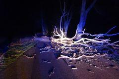 #16 23.02.2020r. droga Kurowo - Ciekocinko drzewo powalone na jezdnię
