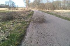 #20 11.03.2020r. Przebedowo - gałęzie leżące na drodze