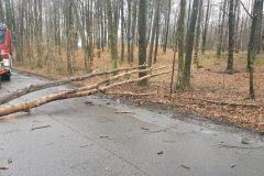 #21 12.03.2020r. droga Żelazno - Zwartowo drzewo powalone na drogę