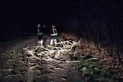 #29 Przebedowo konar drzewa powalony na drogę