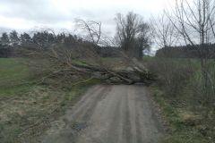 #31 13.03.2020r. Starbienino drzewo powalone na drogę gminną