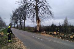 #32 13.03.2020r.  Choczewo ul. Pucka pęknięte drzewo zagrażające powaleniem na drogę wojewódzką nr 213