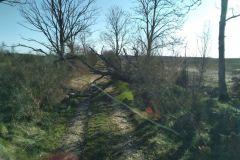 #38 23.03.2020r. Zwarcienko - drzewo powalone na drogę