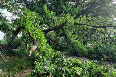 #44 23.06.2021r. Gościęcino - konar drzewa powalony na jezdnię i plac zabaw