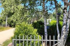 #46 28.06.2021r. Kopalino ul. Żytnia - drzewo zagrażające powaleniem na plac zabaw