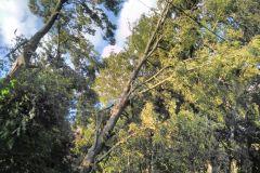 #54 02.07.2019r. Lublewo Lęborskie  drzewo  zagrażające powaleniem na linię energetyczną i drogę