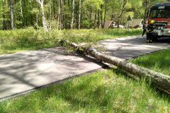 #60 17.05.2020r. Osieki Lęborskie  - powalone drzewo na drogę powiatową