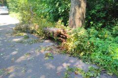#60 Mierzyno konar drzewa powalony na samochód osobowy