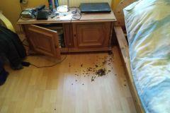 #63 27.05.2020r. Kopalino ul. Bursztynowa 30 - rój pszczół w pokoju budynku mieszkalnego