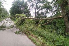#70 23.06.2020r. droga Zwartowo - Borkowo Lęborskie - konar drzewa powalony na jezdnię