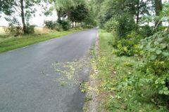 #71 26.08.2021r. droga Choczewo - Choczewko  - konar drzewa powalony na drogę powiatową