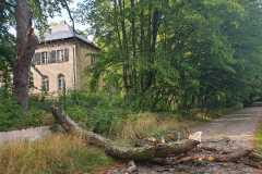 #74  19.08.2019r. Lublewo Lęborskie drzewo zagrażające powaleniem na drogę i posesję