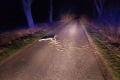 #8 09.02.2020r. droga Choczewo - Choczewko konar powalony na jezdnię