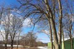 #8 27.01.2021r. Choczewko -gałęzie zwisające nad jezdnią drogi powiatowej