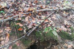 #88 11.11.2019r. Choczewo ul. Pucka - pies uwięziony w korzeniach drzew