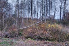 #89 21.11.2019r. Łętówko drzewo powalone na linię energetyczną