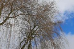 #9 29.01.2021r. Borkowo Lęborskie - kot na drzewie
