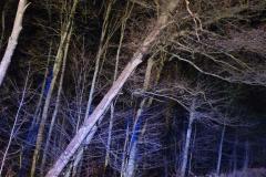 #92 14.12.2019r. droga Choczewo - Lublewko drzewo zagrażające powalnie na drogę wojewódzką nr 213