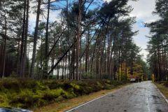 #92 21.10.2021r. Lubiatowo - drzewa zagrażające powaleniem na drogę powiatową