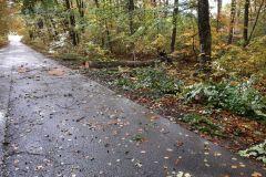 #93 21.10.2021r. Zwartowo osada - drzewo powalone na drogę powiatową