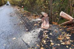 #94 21.10.2021r. Przebendówko - konar drzewa powalone na drogę wojewódzką