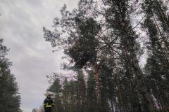 #96 30.11.2019r. Choczewo ul. Kusocińskiego konary zagrażające powaleniem na drogę