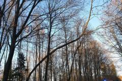 #99 31.12.2019r. droga Żelazno - Zwartowo drzewo zagrażające powaleniem na drogę powiatową